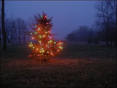 Tree1205_1